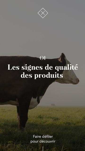 image maquette vache